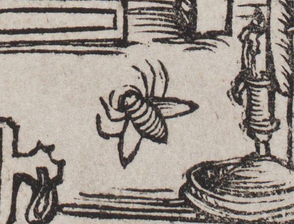 1517b version: the fly with 5 legs. Библиотека Академии Наук, НИОРК, 994 СП