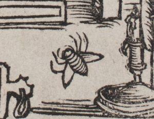 Вариант 1517b: пятиногая муха. Библиотека Академии Наук, НИОРК, 994 СП